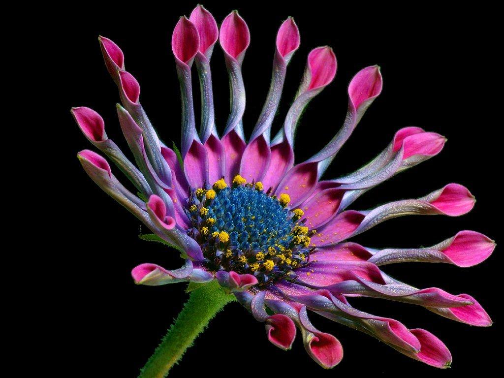 daisy2bg012503.jpg