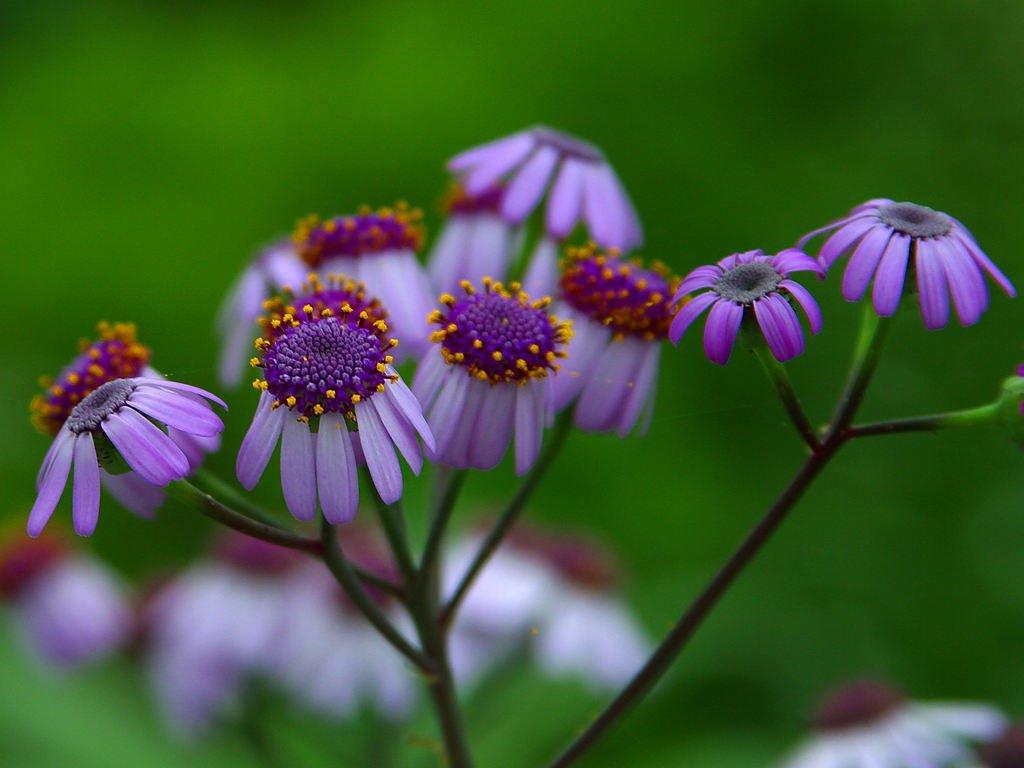 flower6bg032104.jpg