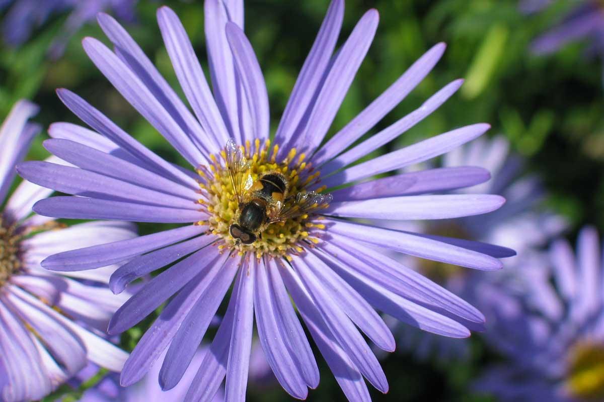 flowerbee8j6.jpg