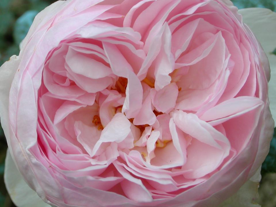 flowers140.jpg