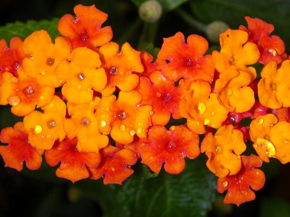 flowers160.jpg