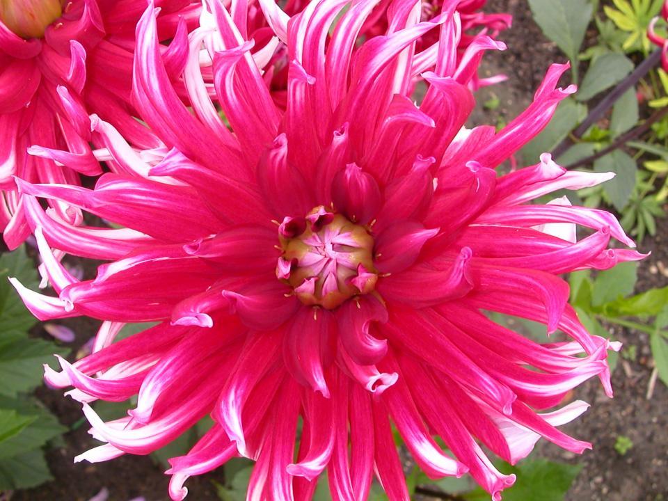 flowers54.jpg