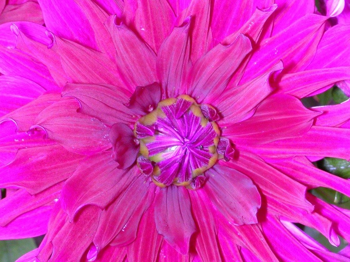 flowers5550.jpg