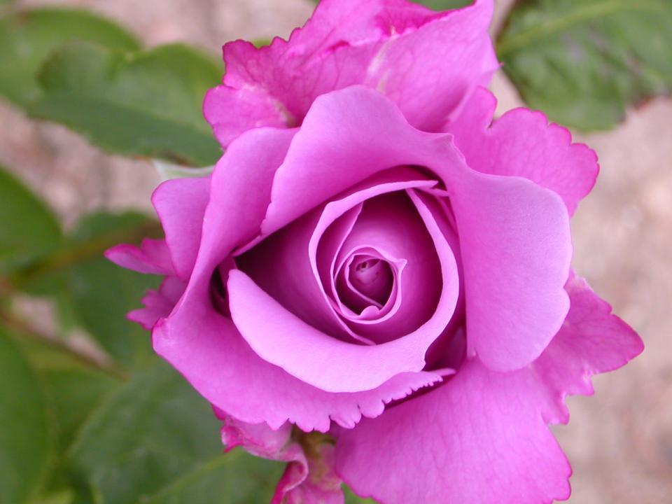 flowers66.jpg
