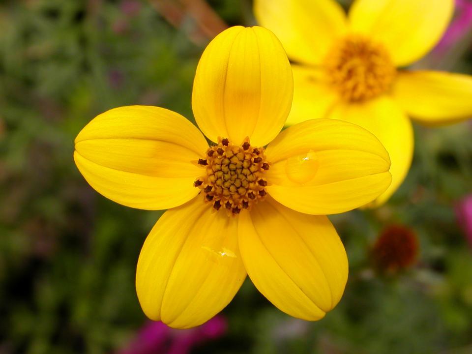 flowers73.jpg