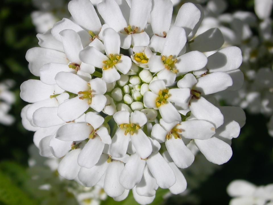 flowers94.jpg