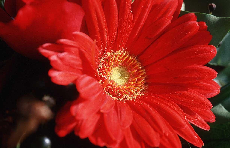 flowerxv71.jpg