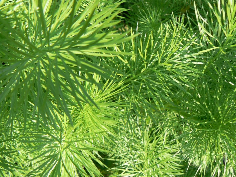 vegetation149.jpg